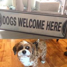 DogsWelcome